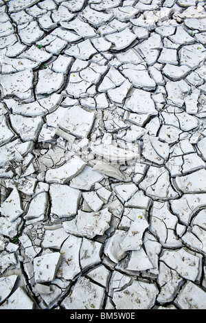 La boue d'argile fissurée en raison d'une récente sécheresse. Banque D'Images
