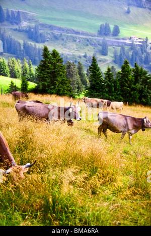 Alpes paysage avec vaches dans un champ. Banque D'Images
