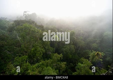 Forêt Amazonienne, Sacha Lodge, Équateur Banque D'Images