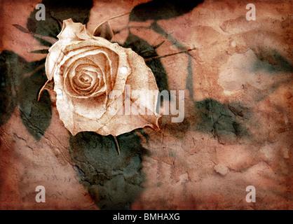 Grunge image avec rose rose Banque D'Images
