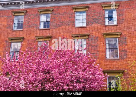 Maison de brique et de printemps fleur le Beacon Hill, Boston, Massachusetts