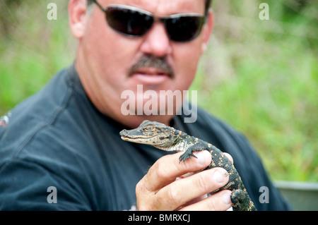 Un animal de manutention tenant un bébé alligator sauvage dans sa main Lake Martin, dans le bassin marécageux d'Atchafalaya, Banque D'Images