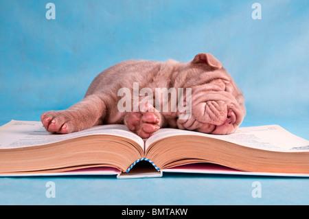 Little Cutie s'est endormi en lisant un livre Banque D'Images