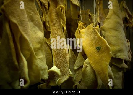 La graisse de porc de l'espagnol les porcs ibériques est en magasin de viande en Prado del Rey, La Sierra de Cadiz, Banque D'Images