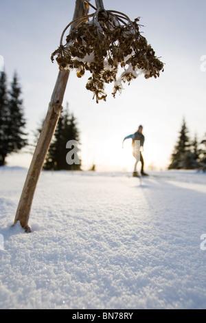 Femme ski nordique sur les pistes de ski en hiver Baycrest près de Homer, Kenai Peninsula, Alaska Banque D'Images