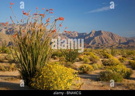 Anza-Borrego Desert State Park, Californie. Banque D'Images