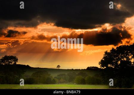 Arbre généalogique Silhoutted à flanc contre ciel d'orage au coucher du soleil Banque D'Images