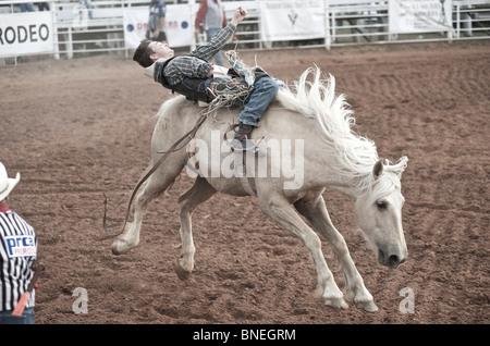 Lancer cheval Rodeo Cowboy Membre de l'érythroblastopénie à partir de son retour à Petite-ville Bridgeport, Texas, États-Unis