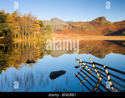 Langdale Pikes reflétée dans un mirrorlike Blea Tarn tôt le matin, Parc National de Lake District, Cumbria, Angleterre. Banque D'Images