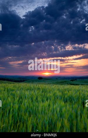 Coucher de soleil sur champ de blé près de Pienza, Toscane Italie Banque D'Images