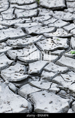 La boue d'argile fissurée à sec lors d'une récente sécheresse. Banque D'Images