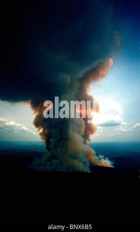 Les incendies de forêt de pluie à Jarí Forestal, Pará, Brésil. Banque D'Images
