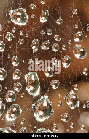 Les gouttelettes d'eau sur les araignées web. Banque D'Images