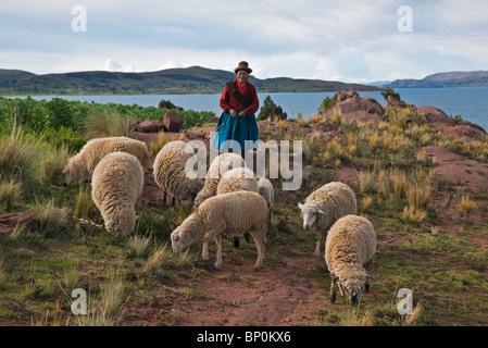 Le Pérou, une vieille femme indienne autochtone ses troupeaux de moutons avec de maigres pâturages près des rives Banque D'Images