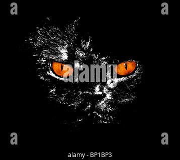 Des yeux de chat sérieux regarder quelque chose avec fond noir. Banque D'Images