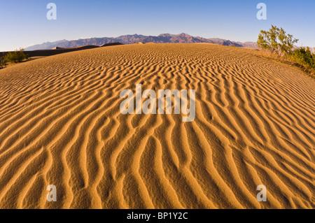 Lumière du soir sur dune, Mesquite Flat dunes de sable, Death Valley National Park. Californie Banque D'Images