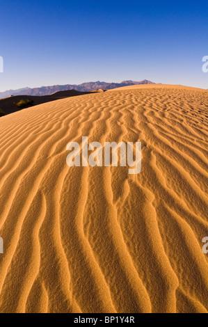 Lumière du soir sur dune, Mesquite Flat dunes de sable, Death Valley National Park. Californie