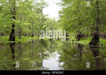 Les arbres et les marécages dans le lac Martin, une partie de l'île Cypress préserver, à l'extrémité ouest de la Banque D'Images