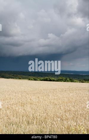 Menaces sur un champ de blé sur la guerre en bas de la colline sur la South Downs Way, Hampshire, Angleterre Banque D'Images