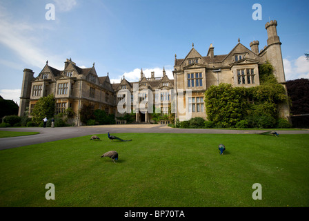 Corsham Court Wiltshire UK Paons Banque D'Images