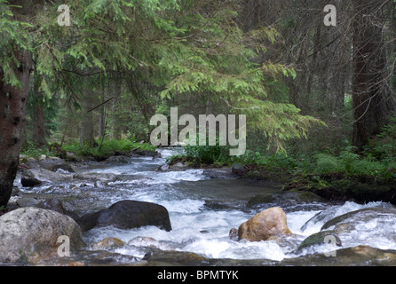 Rivière qui traverse la vallée de Jasna dans les Basses Tatras Slovaquie Banque D'Images