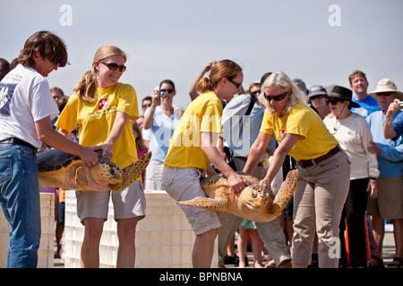 Remis en état une tortue publié retour à l'océan par l'équipe de sauvetage des tortues sur l'île de Palms, SC. Banque D'Images