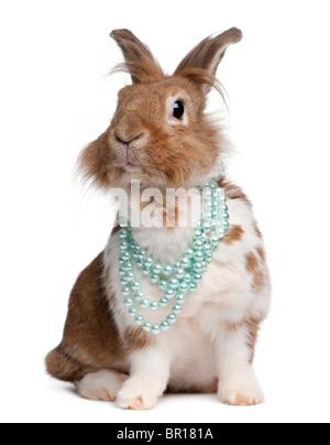 Portrait d'un lapin européen portant des colliers de perles, Oryctolagus cuniculus, in front of white background Banque D'Images