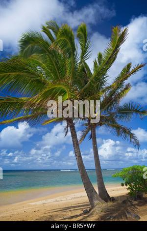 Kauai, Hawaii deux palmiers frame un tronçon de Anini Beach sur la côte nord de Kauai Banque D'Images