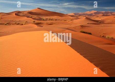 Lumière du matin rend l'éclat des sables bitumineux dans les dunes de l'Erg Chebbi près de Merzouga au Maroc Banque D'Images