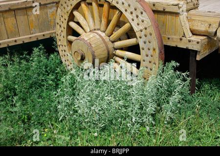 Roue pour wagon en bois décoratif envahies par la végétation verte Banque D'Images