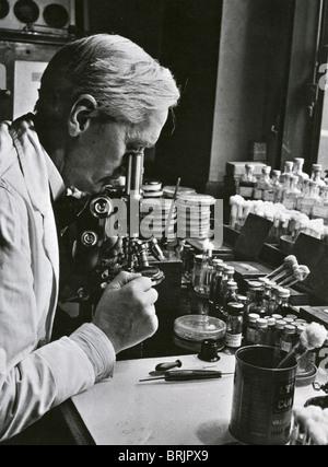 SIR Alexander Fleming (1881-1955) biologiste pharmacologue écossais/dans son laboratoire à l'Hôpital St Mary, Paddington, Banque D'Images