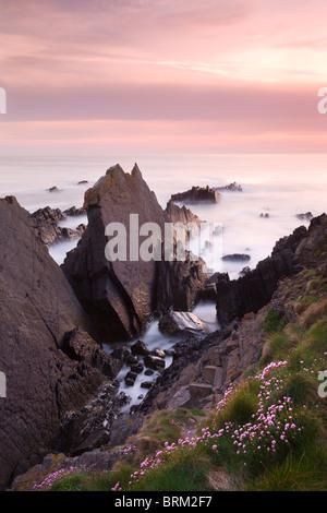 Les roches déchiquetées à Hartland Quay sur la côte nord du Devon, Royaume-Uni. Printemps (avril) 2010. Banque D'Images