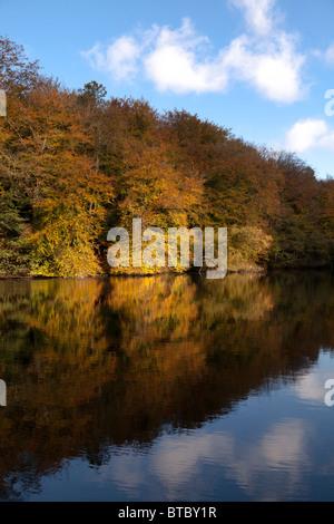 L'automne arbres se reflétant dans le lac encore Banque D'Images