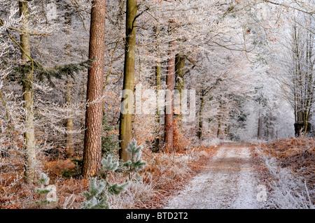 Allemagne: la première gelée dans les forêts sur le Hirschberg dans Limbach, Oden Forest Banque D'Images
