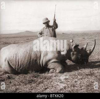 L'ancien président, Theodore Roosevelt, en Afrique debout derrière dead rhino et holding rifle ca. 1909. Banque D'Images