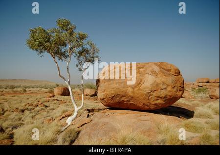 L'Australie, Devils Marbles Conservation reserve, arbre et rocher Banque D'Images