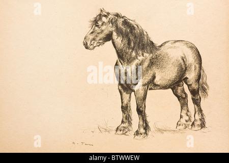 Portrait de chevaux, fusain sur papier par Kurt Tessmann, ca. 1936 Banque D'Images