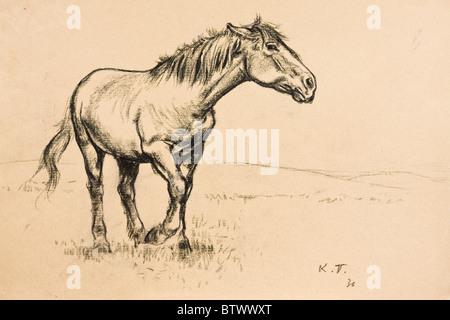 Portrait de chevaux, fusain sur papier par Kurt Tessmann, 1936 Banque D'Images