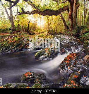 Tollymore Forest Park, l'Irlande du Nord. Banque D'Images