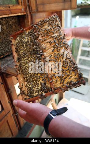 Sur un nid d'abeilles Banque D'Images