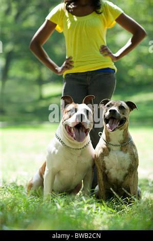 Deux chiens avec leur propriétaire Banque D'Images