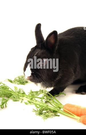 Un peu Bunny mange une carotte. Tous isolé sur fond blanc. Banque D'Images