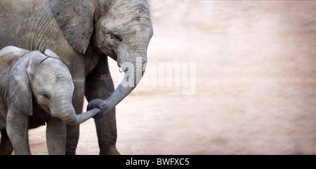 Mother with baby elephant (Loxodonta africana), Kruger National Park, la province de Mpumalanga, Afrique du Sud Banque D'Images