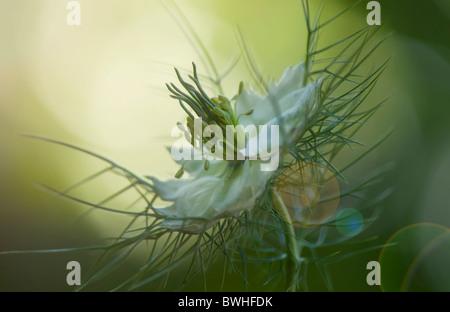 Un seul amour blanc-dans-le-mist flower avec sun flare