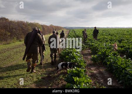Shooters (armes à feu) et leurs chiens sur un gibier tirer, Cambridgeshire, UK