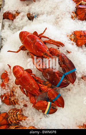 Nouveau-brunswick, Canada. Le homard à vendre à Alma. Banque D'Images