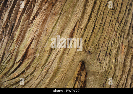 Tronc de l'arbre - John Gollop Banque D'Images