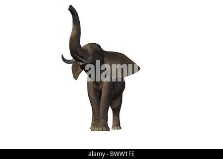 Elephant - beau mâle pachyderme avec d'énormes défenses. Banque D'Images