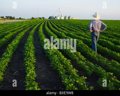 Farmer l'examen de sa récolte Banque D'Images