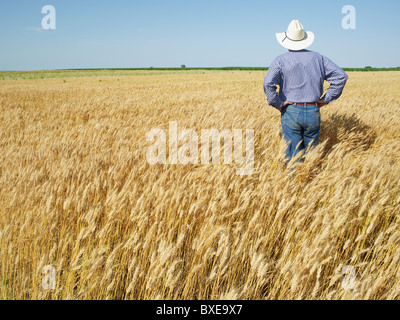 Farmer standing in wheat field Banque D'Images